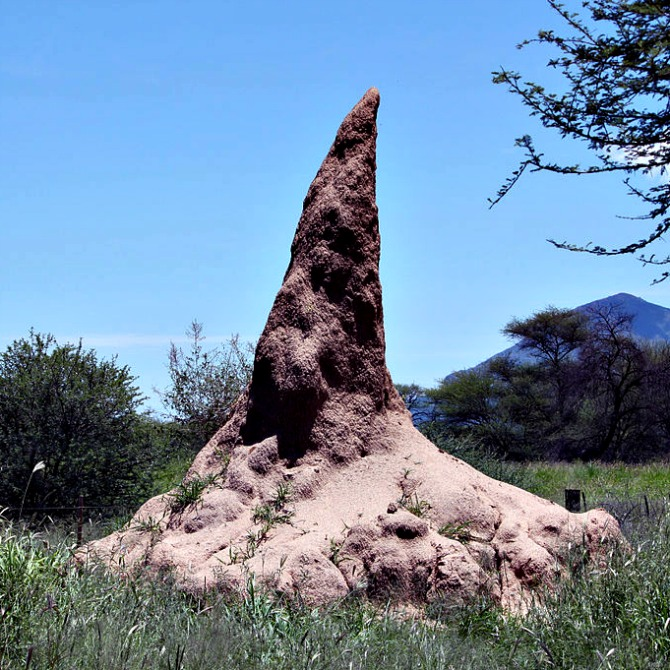 A termite mound - this one is from Namibia - sorry - but the termites use the same building principles there - courtesy Anagoria via Wikimedia