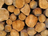 Ends of Logs Stacked for Drying